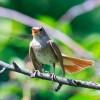 Birdify: le Shazam pour oiseaux !