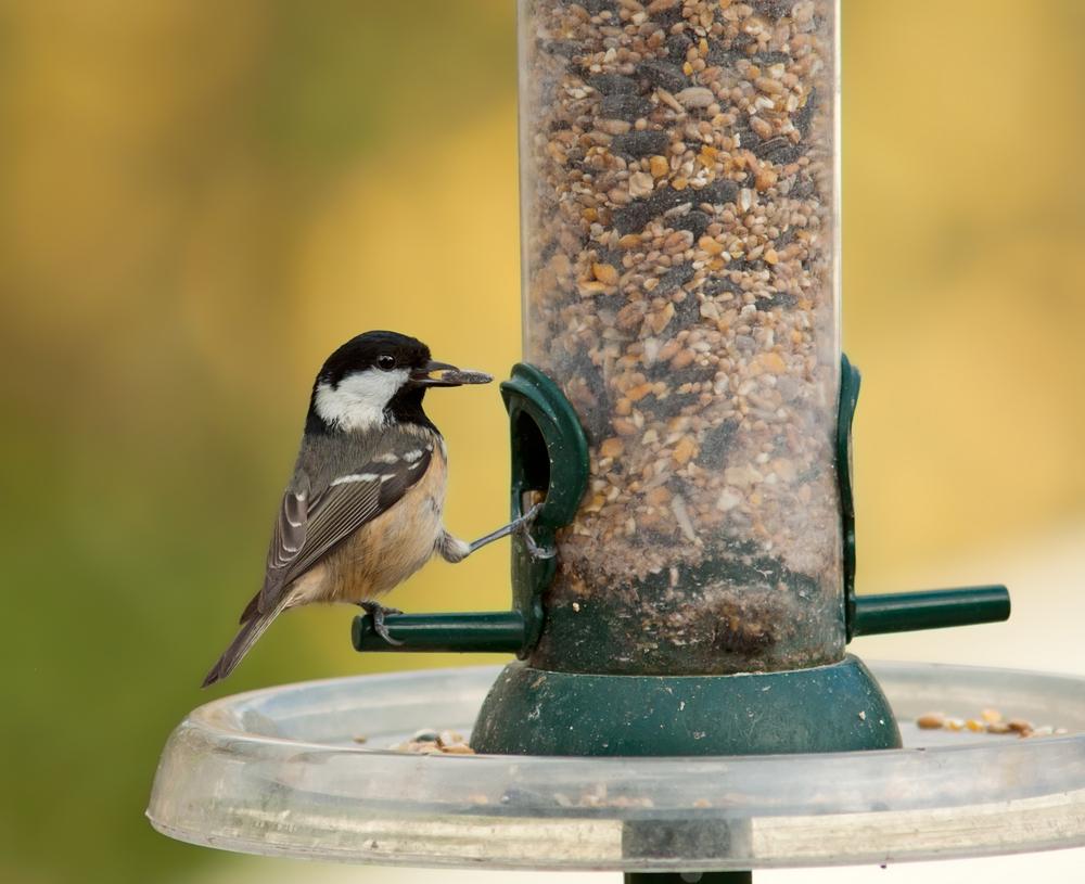 Mangeoire pour m sanges du jardin aidez vos m sanges l - Distributeur de graines pour oiseaux ...